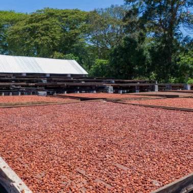 Séchage des fèves de cacao Madagascar