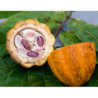 Cacao GRAND CRU ARRIBA ECUADOR
