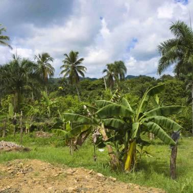 Cacao GRAND CRU TRINIDAD